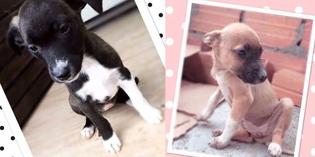 Adote: conheça animais a espera de um lar