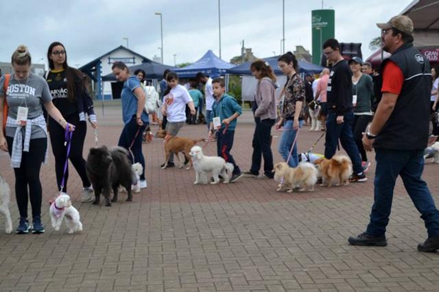Evento especial traz informações sobre cães na Melhor Idade