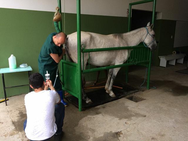 Inseminação artificial de animais é realizada em Orleans