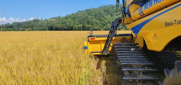 Santa Catarina dá início a colheita do arroz com lançamento de novo cultivar