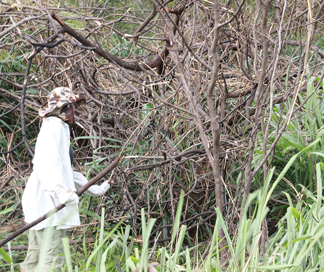Afugentamento garante proteção da fauna nas obras complementares da BR-101