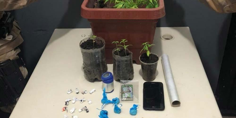 PM apreende drogas e pés de maconha com adolescentes em Esplanada