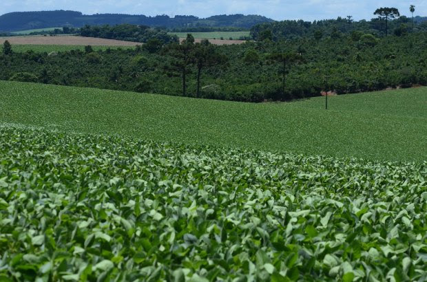 Cidasc proibe fabricação, comércio, prescrição e uso do herbicida Paraquat