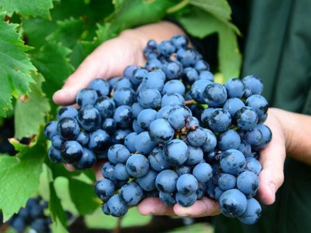 Agricultura investirá R$ 1 milhão para proteger do granizo a fruticultura