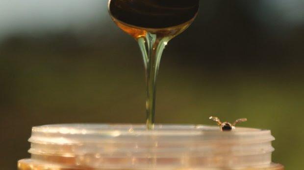 Produtor do melhor mel do mundo SC prevê safra acima da média em 2020