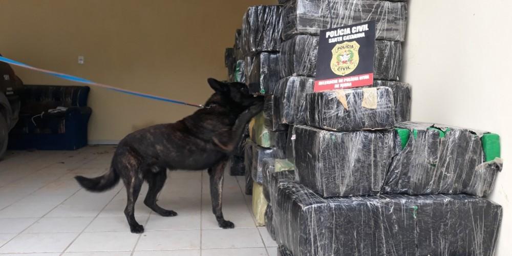 Mais de duas toneladas de maconha são apreendidas na Operação Língua Solta