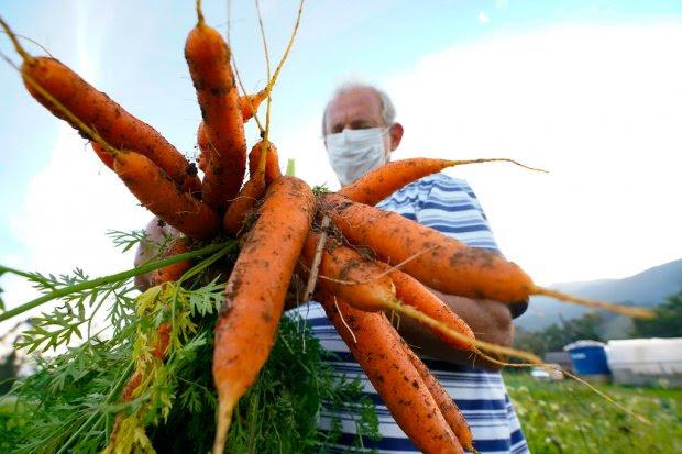 Santa Catarina terá Política Estadual de Agroecologia e Produção Orgânica
