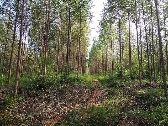 Rio Deserto vence Prêmio de Ecologia com projeto Plantio de Floresta Sustentável