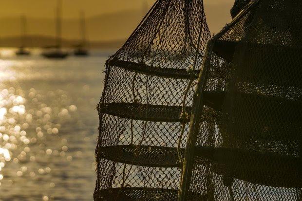 SEA anuncia novas liberações e interdições de cultivos de moluscos em SC
