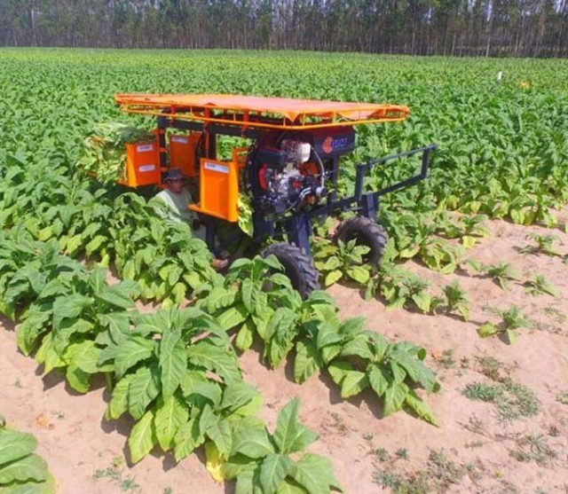 Budny lançará colheitadeira de fumo com feirão na praça de Içara