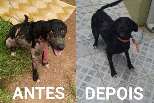 Diferença proporcionada por doações para a ONG Amigo Bicho