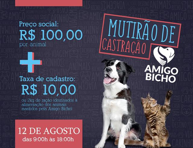Castração de cães e gatos neste sábado a preço de custo