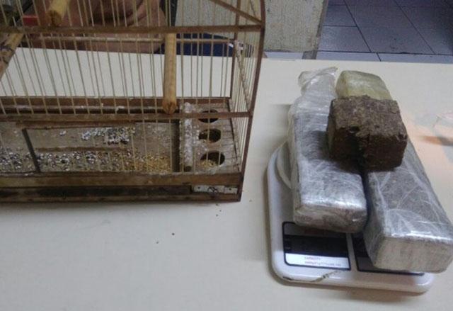 PM apreende um 1,5 quilos de maconha em Criciúma