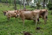 Preços pagos aos produtores de leite em SC registram queda