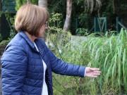 Unesc estimula a promoção da saúde com o uso de plantas medicinais