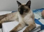 Animalzinho para doação - O gato Godofredo