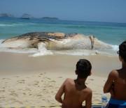 Carcaça de baleia é retirada da Praia de Ipanema, no Rio