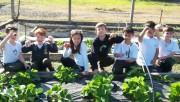 Horta de morangos do colégio Satc gera bons frutos