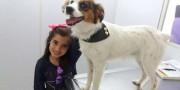 Em cinco anos, mais de dois mil cães e gatos castrados pelo mutirão da ONG Amigo Bicho