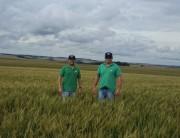 O crescimento do ramo cervejeiro e o auxílio da agronomia
