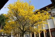 Colorido no campus indica a chegada da Primavera na Unesc
