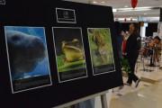 Shopping Della recebe exposição alusiva ao mês do Meio Ambiente