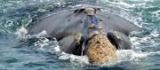 Rota da Baleia Franca representa o futuro do ecoturismo no litoral Sul catarinense