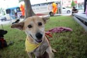 Feira de adoção de cães e gatos acontece no Parque das Nações
