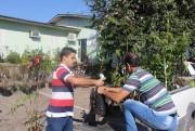 Epagri distribui mudas para incremento dos pomares domésticos