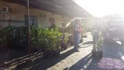Epagri de Maracajá realiza campanha de mudas frutíferas