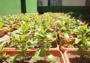 Santa Catarina cria Política de Apoio à Agricultura Urbana