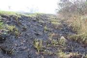 Frio faz vegetação secar e aumenta riscos de queimadas na BR-101 Sul/SC