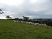 Dia de campo reúne agricultores e incentiva a pecuária em Cocal