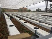 Inovação: Curso de Agronomia da Unisul desenvolve projeto