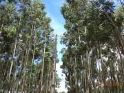 Manobra impede votação de projeto que limita plantio de árvores