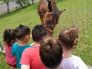 Projeto animais é levado para sala de aula no CEI Beato Aníbal Maria di Frância