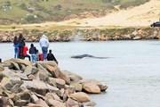 Conheça pontos ideais para observar Baleias Francas