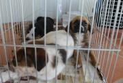 Evento em prol de cachorros de rua reúne mais de 100