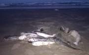 Aparecimento de bagres mortos intriga pescadores