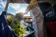Fapesc seleciona bolsistas para desenvolver inovações para a agricultura em SC