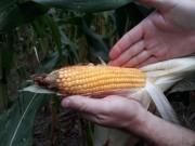 Produtores rurais poderão renegociar contrato do Programa Nacional do Crédito Fundiário