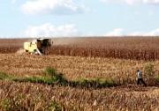 Governo de SC cria Grupo de Trabalho para dar agilidade à Rota do Milho