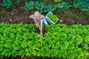 Seminário aborda o papel da mulher na conservação da agrobiodiversidade