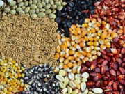 Capacitação técnica on-line na produção de grãos começa dia 12 de maio