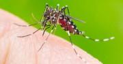 Focos de dengue são encontrados e orientações são repassadas
