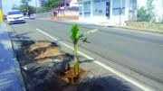 Bananeira é plantada em buraco no Centro de Içara