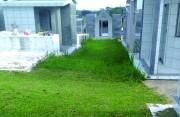 Manutenção só é feita em cemitério após reclamação
