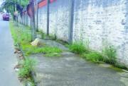 Moradores de Içara reclamam da vegetação nas calçadas