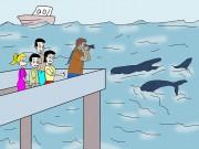 Baleia franca surge na praia