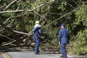 Madeira de árvores derrubadas pelo ciclone podem ser usadas nos danos